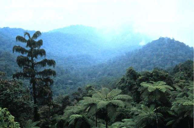 Rainforest view at Maxell Hill, west Malaysia