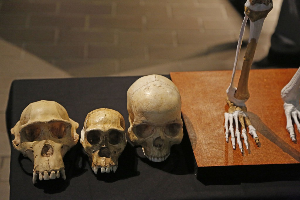 South Africa Palaeo Skeletons